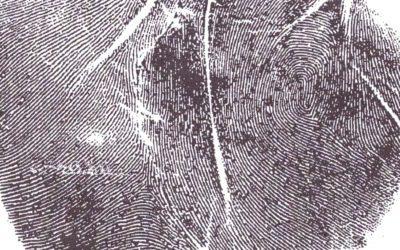 Glyphs – Double Loop on Venus Mount