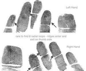 Glyphs – 4 Main Patterns – Radial Loop – Water